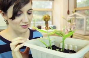 Jumpstart Your Garden: Regrow Vegetable Food Scraps